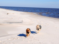Legends' mascots Riley and Kaydee on the beach at Bay St. Louis