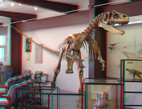 Allosaurus, on display in the Dinosaur Quarry Visitor Center.