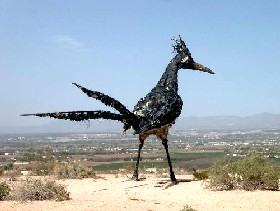 Giant Roadrunner near Las Cruces, New Mexico