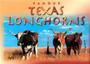 Texas Longhorns Postcard