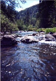 The Black River in Apache-Sitgreaves National Forest, Arizona