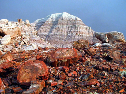 Petrified Forest courtesy National Park Service.