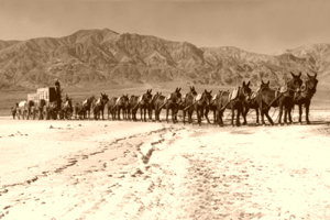 20-Mule Team, Death Valley, California, 1949