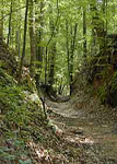 The sunken trace