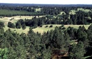 Halsey National Forest