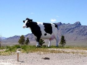 Nevada Cow