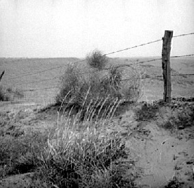 Tumbleweed and barbed wire fence