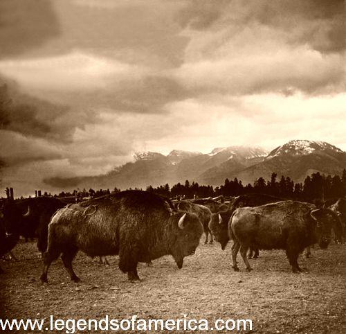 Montana Native Plants: Native American Legends And Myths