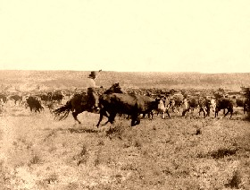Cutting out from the herd in 1907.