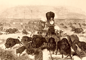 Shooting buffalo from the train.
