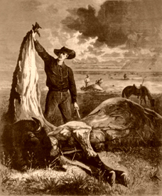 Slaughtered Buffalo