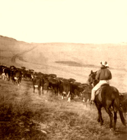 The Cattle Trail in 1905