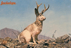 Jackalope Postcard, 1968 Dexter Press West Nyack, New York