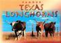 Texas Longhorns Postcard