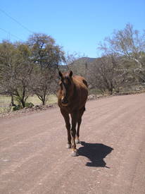 A horse on Harshaw Road