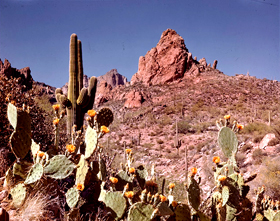 In the Superstition Mountains