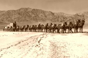 20-Mule Team, Death Valley, California, 1949