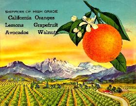 Citrus groves of California