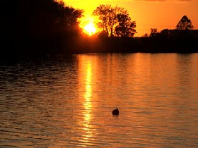 Creve Coeur Lake near St. Louis, Missouri