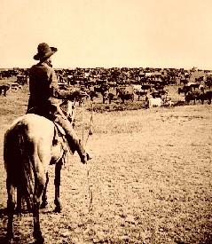 Cattle Round-up.