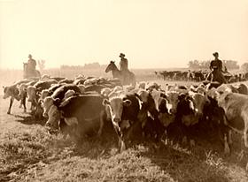 Cowboys in Nebraska