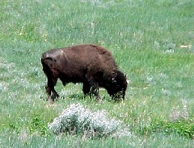 Dakota National Grasslands