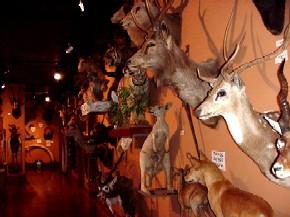 Buckhorn Saloon Museum Interior