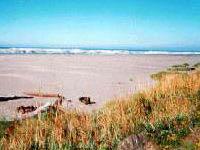 Pacific Beach State Park Washington Stock Photo & More ... |Pacific Beach State Park