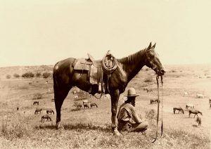 Horse Wrangler by Erwin E. Smith, 1910