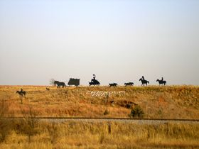 A life-sized silhouette of a trail cattle drive sits on a hill  outside Caldwell, Kansas, Kathy Weiser,