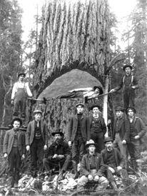 Lumberjacks in California