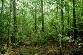 Big Thicket in Texas