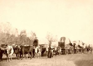 Freighting in the Black Hills, South Dakota by John C.H. Grabill