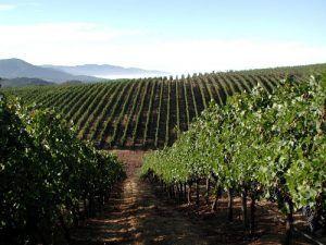 Napa Valley, California Vineyard