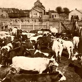 Abilene, Kansas Stockyards, 1886