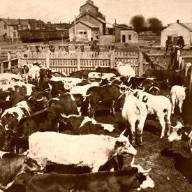 Abilene, Kansas Stockyards, 1886