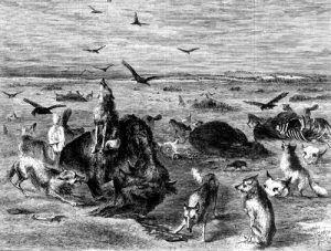 Buffalo Slaughtered