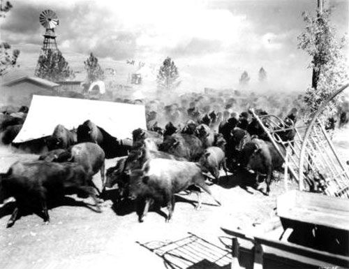 Buffalo Stampede Damage
