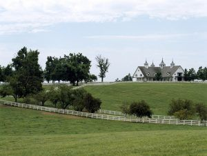 "Horses graze on a farm in Kentucky bluegrass ""horse country."""