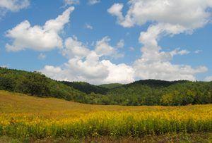 Smoky Mountain Park Meadow