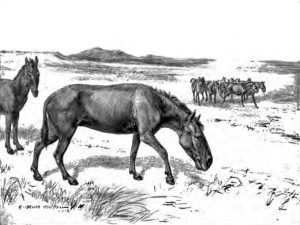 Extinct Horses