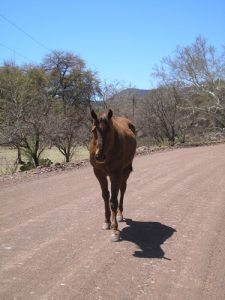 Horse on the road to Harshaw AZ