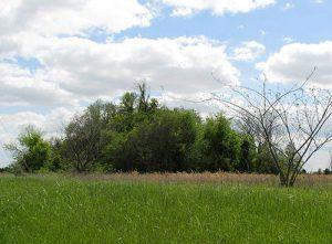 Jaketown Mound