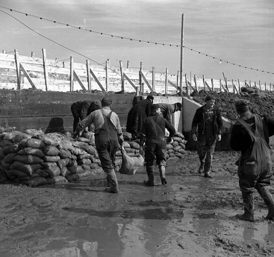 Piling sandbags along the levee flood. Cairo, Illinois, Lee Russell, 1937