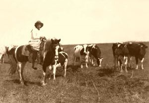12 year-old girl herding cattle in Oklahoma, Lewis Wicks Hine, 1917.
