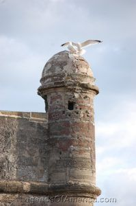 Castillo de San Marcos Bastion Birds