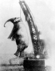 An elephant is hanged.