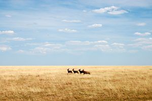 The Plains of Southwest Kansas