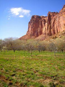 Fruita Orchards