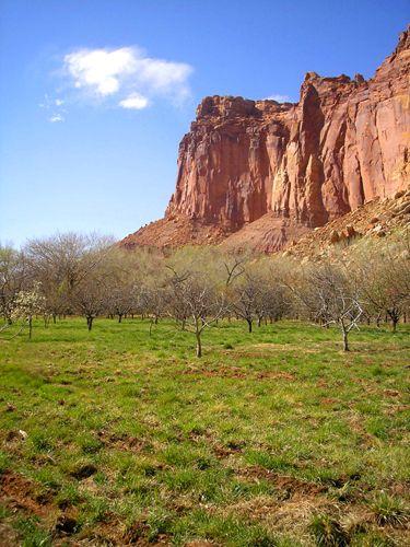 Fruita Utah Orchards
